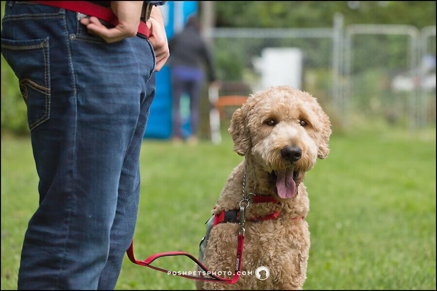 Toronto Service Dog Photographer