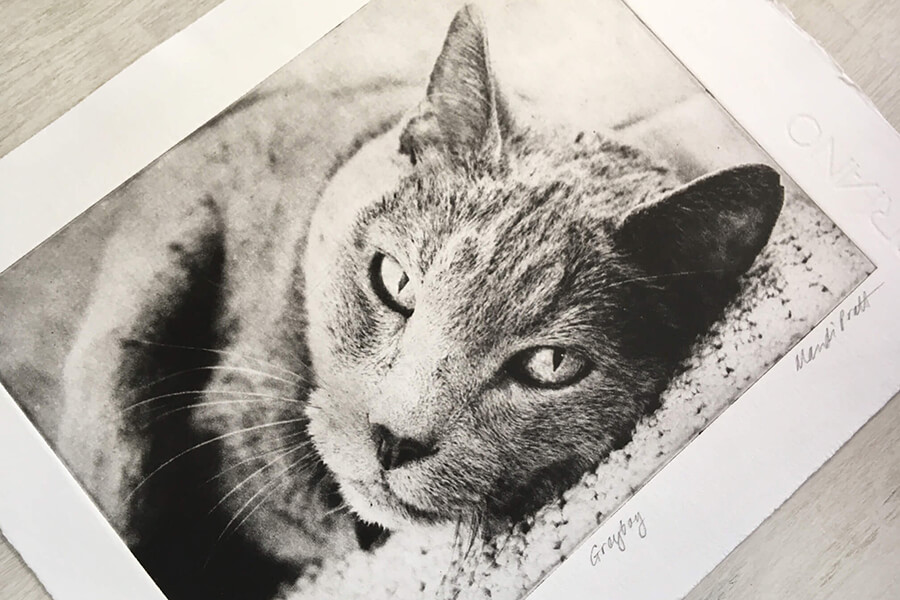 Pet Etchings by Greyboy Pet Prints