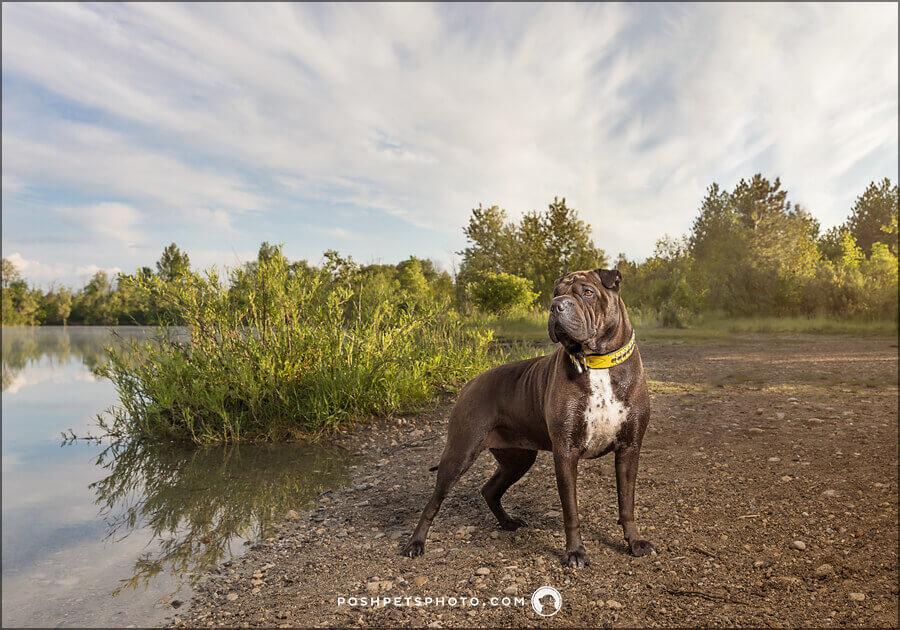adventure dog photography in Cambridge, Ontario
