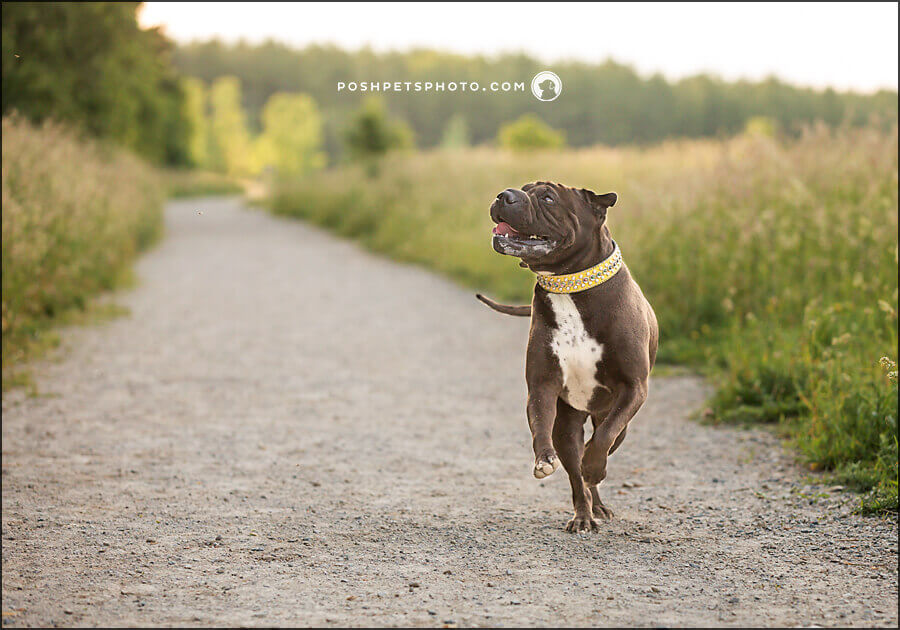 dog photography kitchener waterloo
