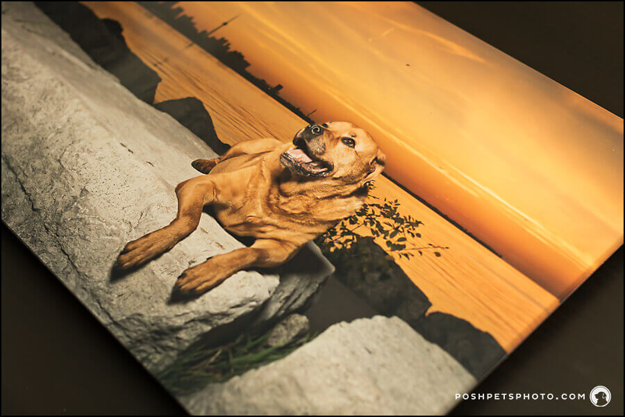 Best Toronto Dog Photographer Acrylic Art Piece