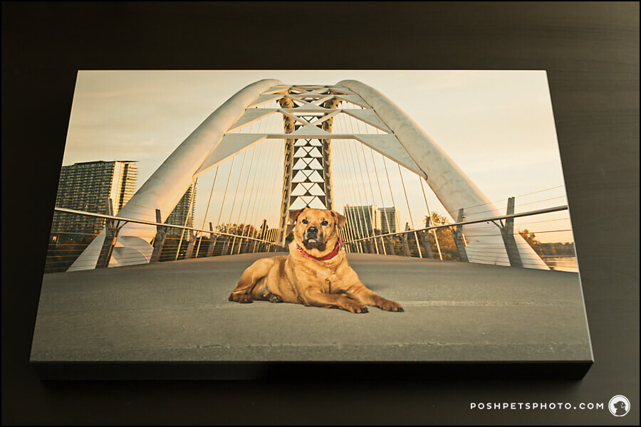 Toronto dog photography standout art