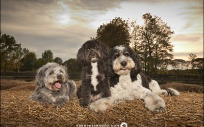Indy, Fenway and Sydney | 3 Furry Friends on an Ontario Farm