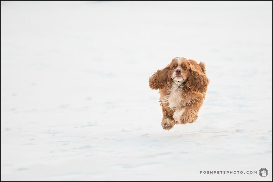 professional dog photography Winnipeg