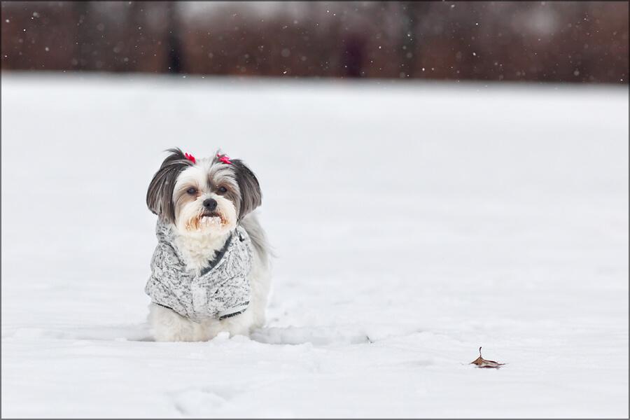 Maddie-snow-3