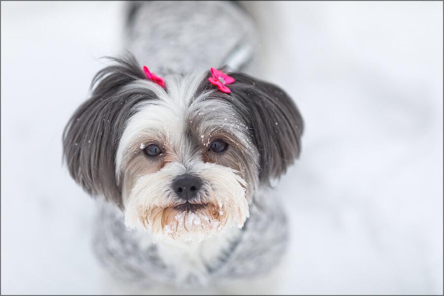 Maddie-snow-4
