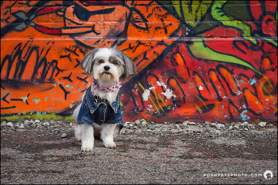 Toronto-dog-photography-graffiti-alley