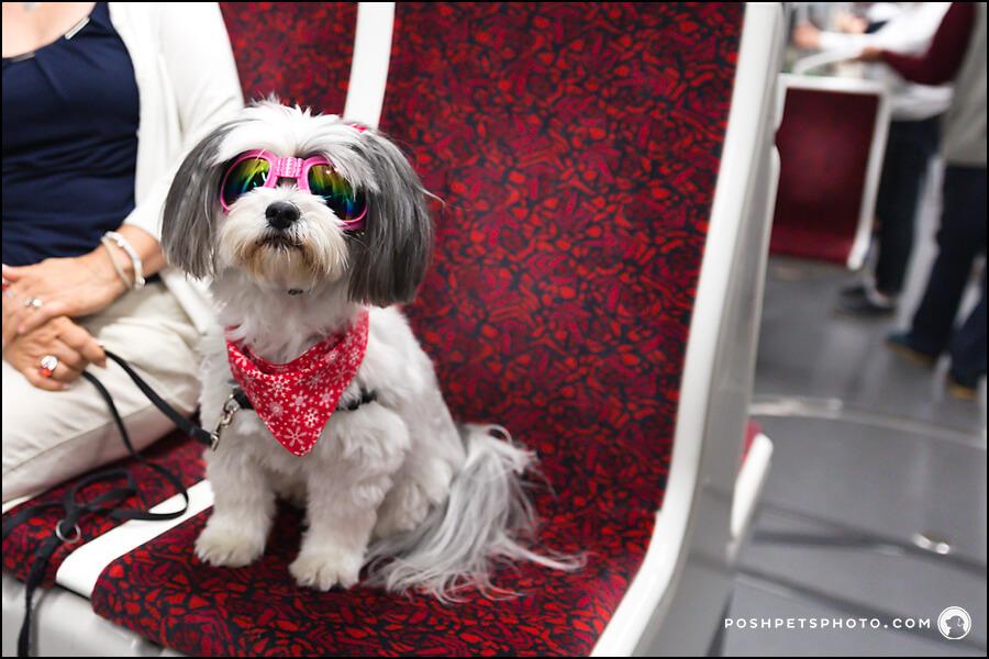 Toronto-dog-photography-ttc