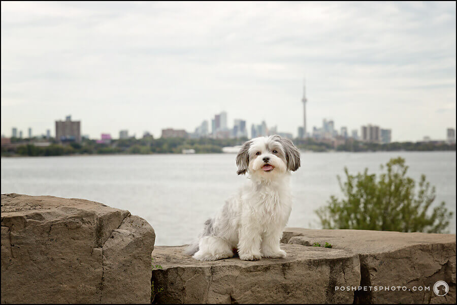 Toronto dog photography cn tower