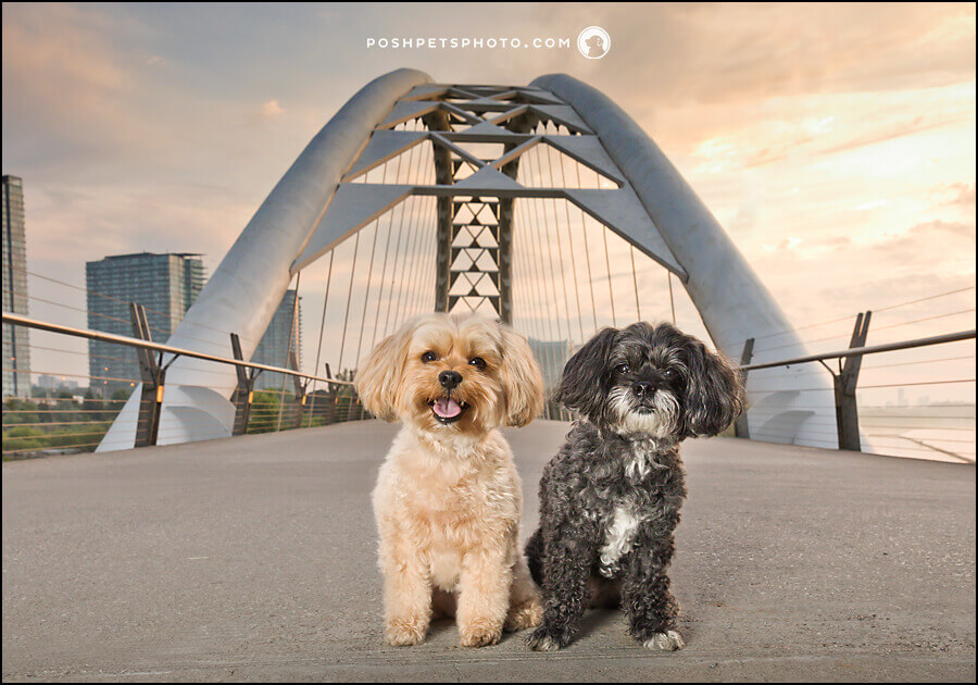 Toronto dog photography dog fountain