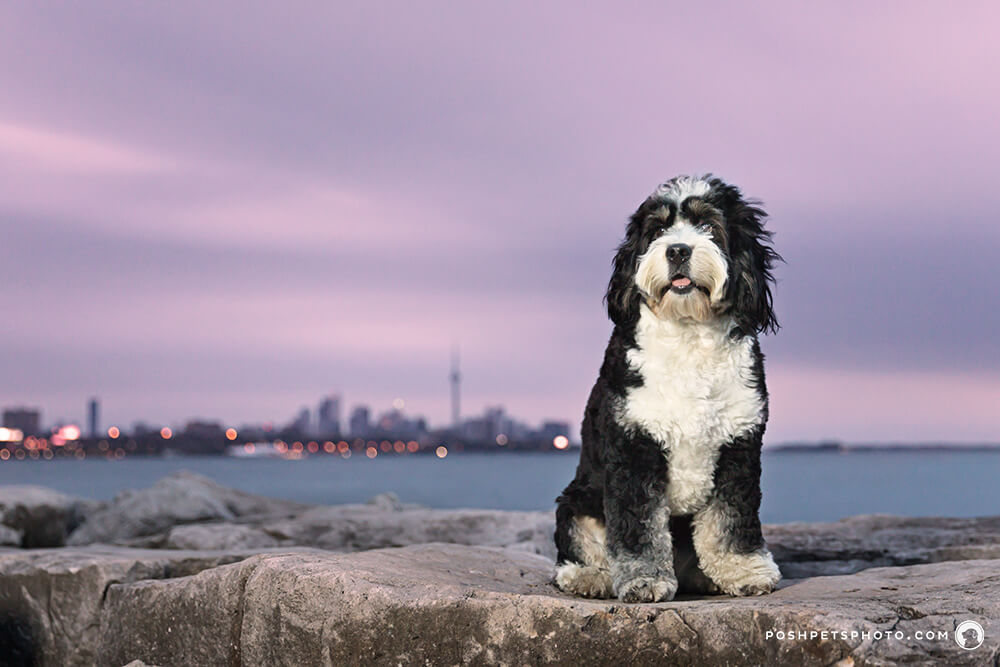 pet photography Toronto