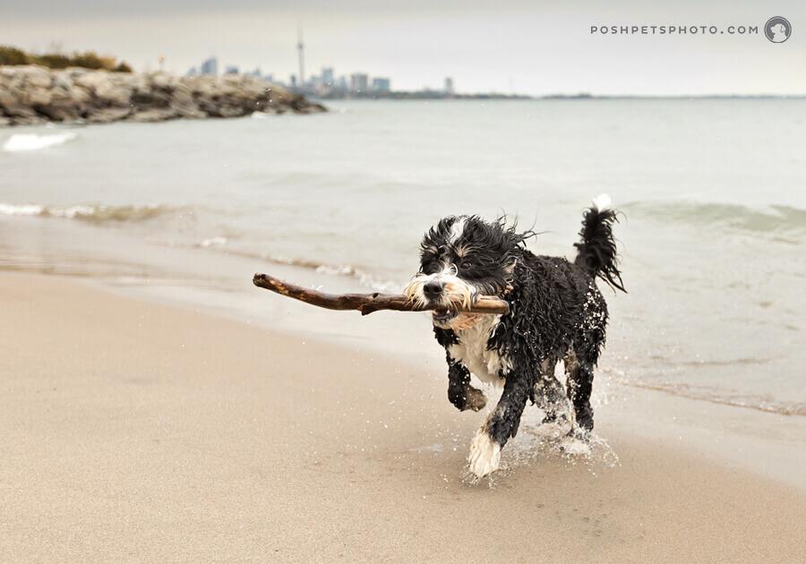 toronto dog photography lake ontario