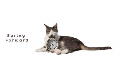 Spring Forward | Daylight Saving Time Guide for Pets