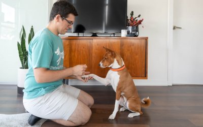 7 Ways to Make Your Dog Happy on a Consistent Basis