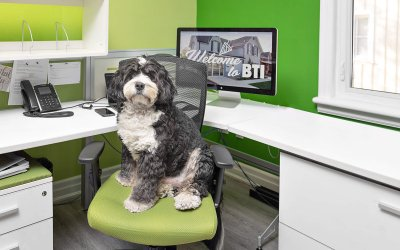 Myca, The Director of Happiness |dog@work Toronto