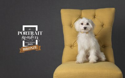 Dog Portrait Award for Toronto Posh Pets® Photography