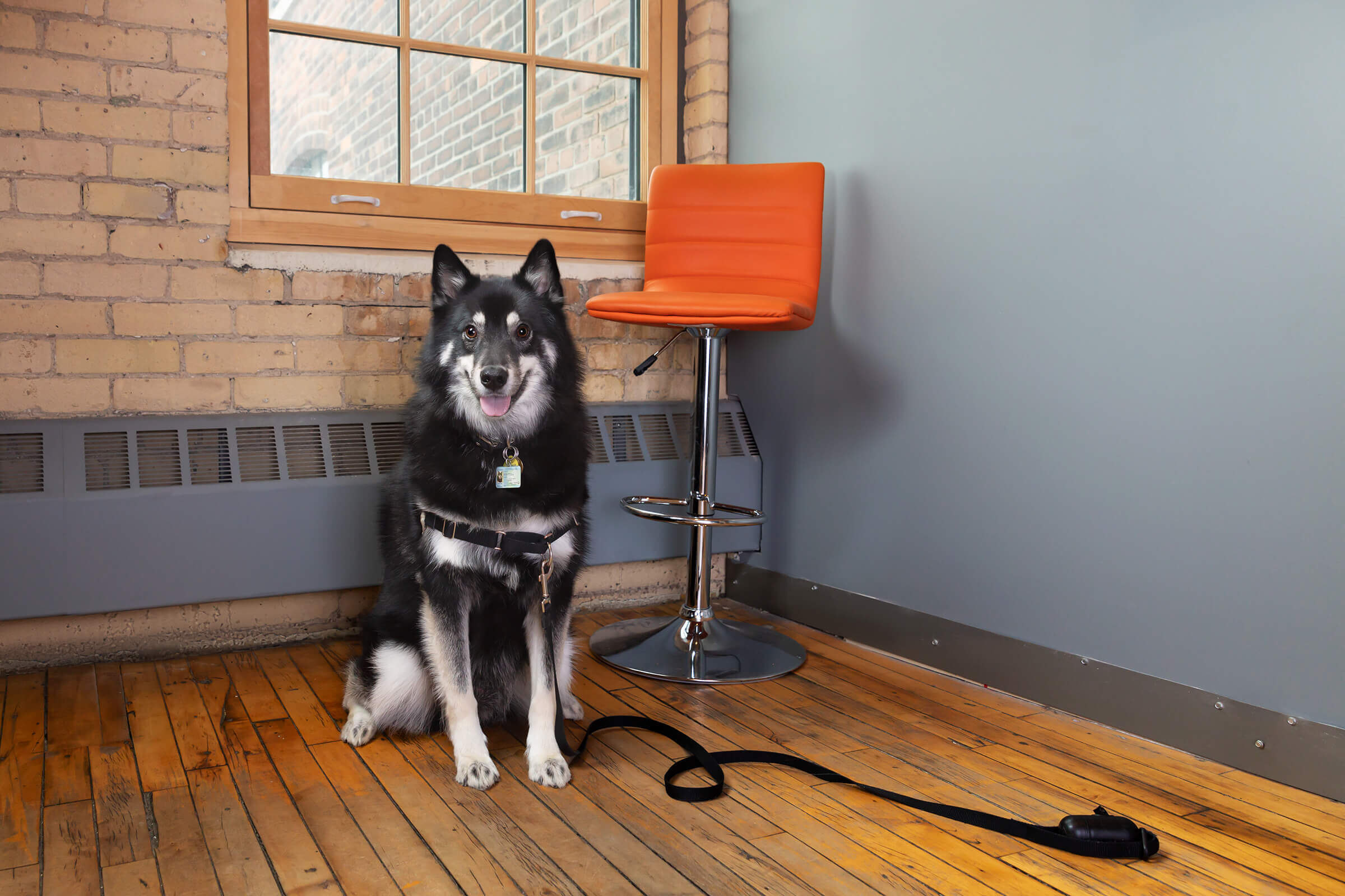Toronto-dogs-in-the-office-photography