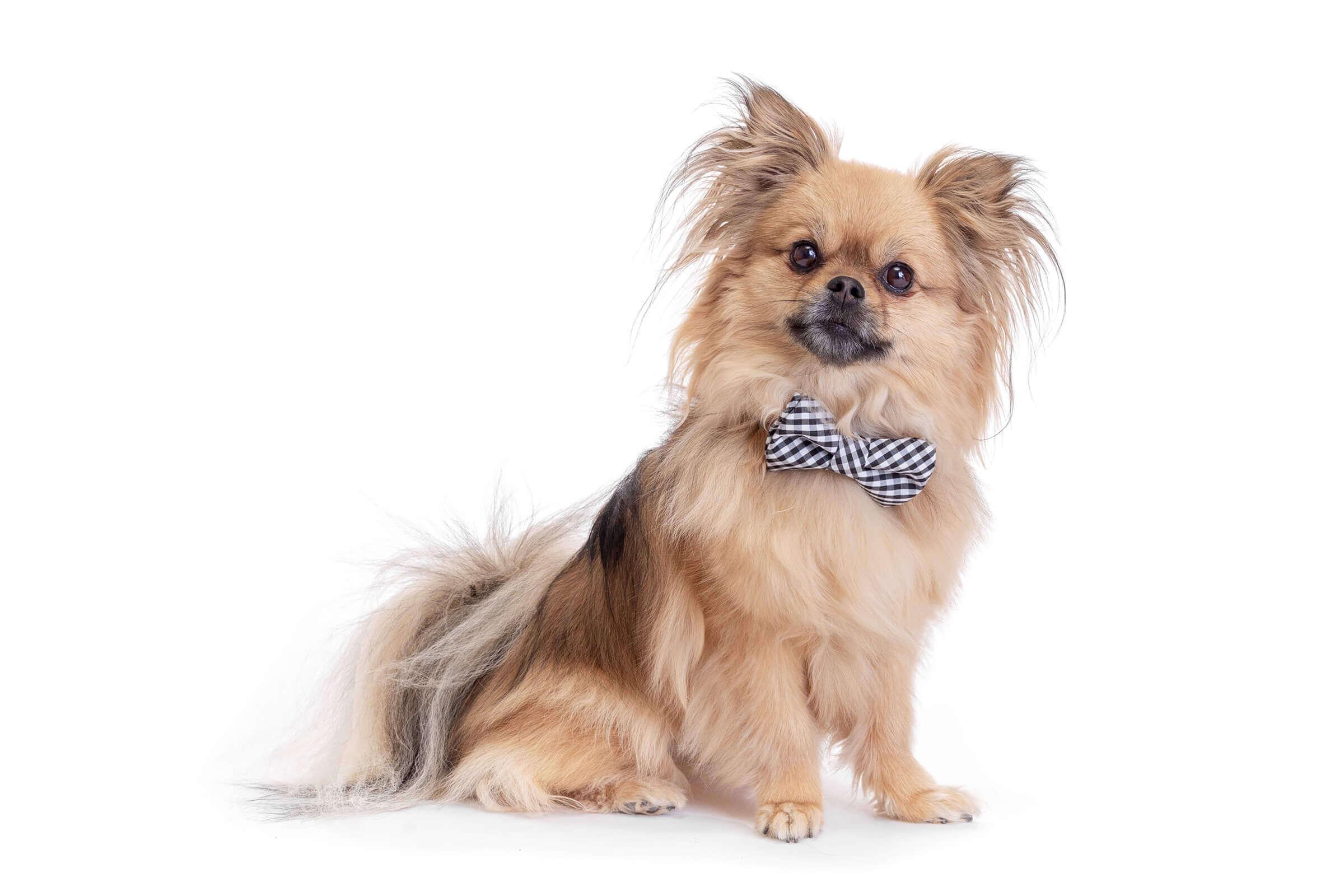 dog photography mini session Toronto