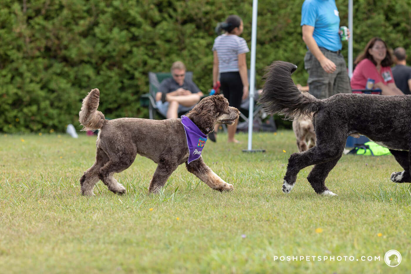 black and brown dog chasing each other