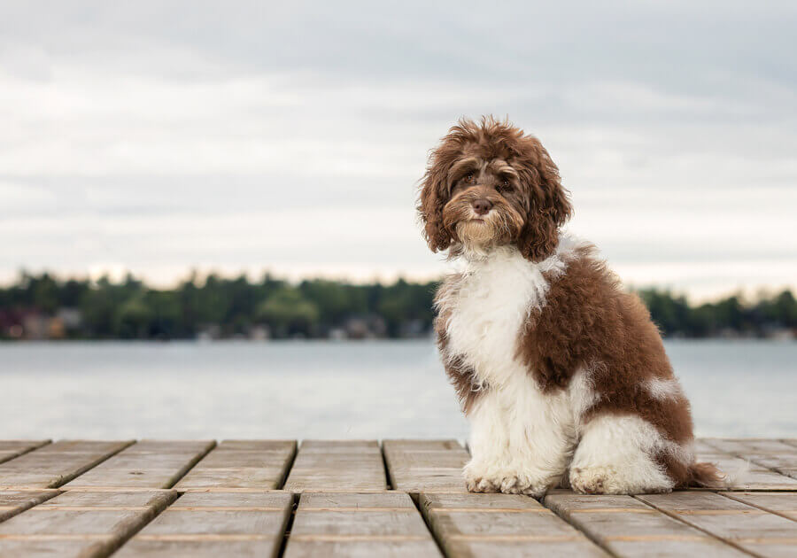 dog photography ontario