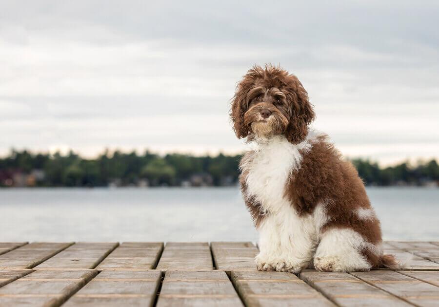 dog photography ontario