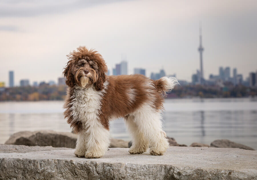 dog photographer ontario