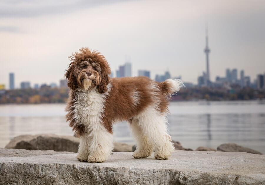 dog photographer ontario