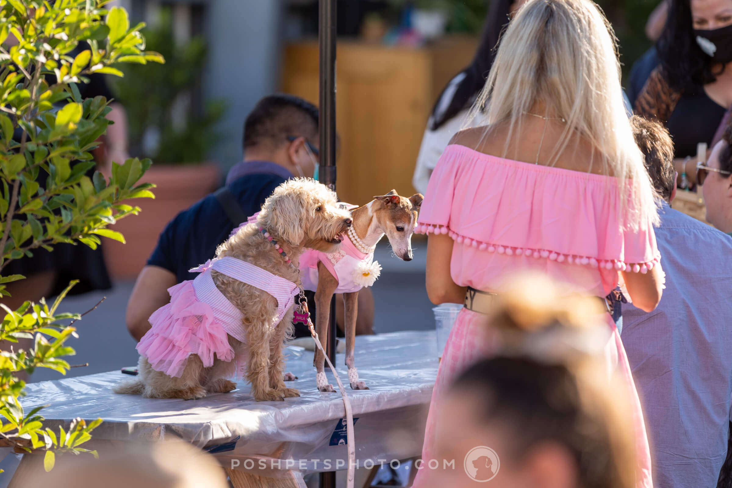 two dog bridesmaids in pink