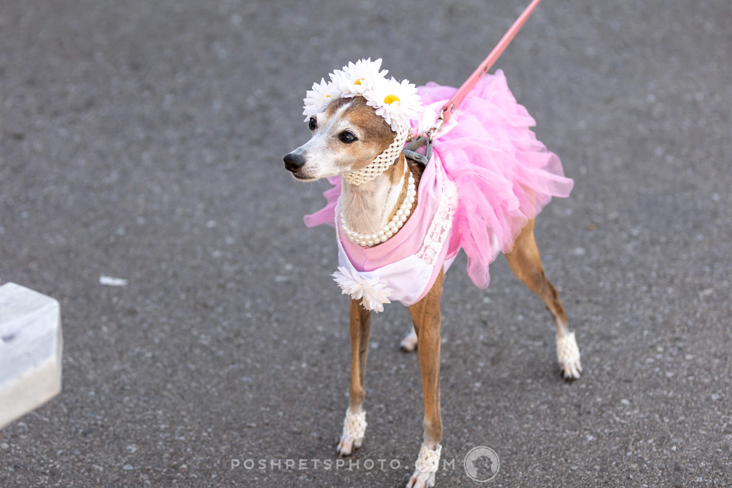posh-pets-photography-18