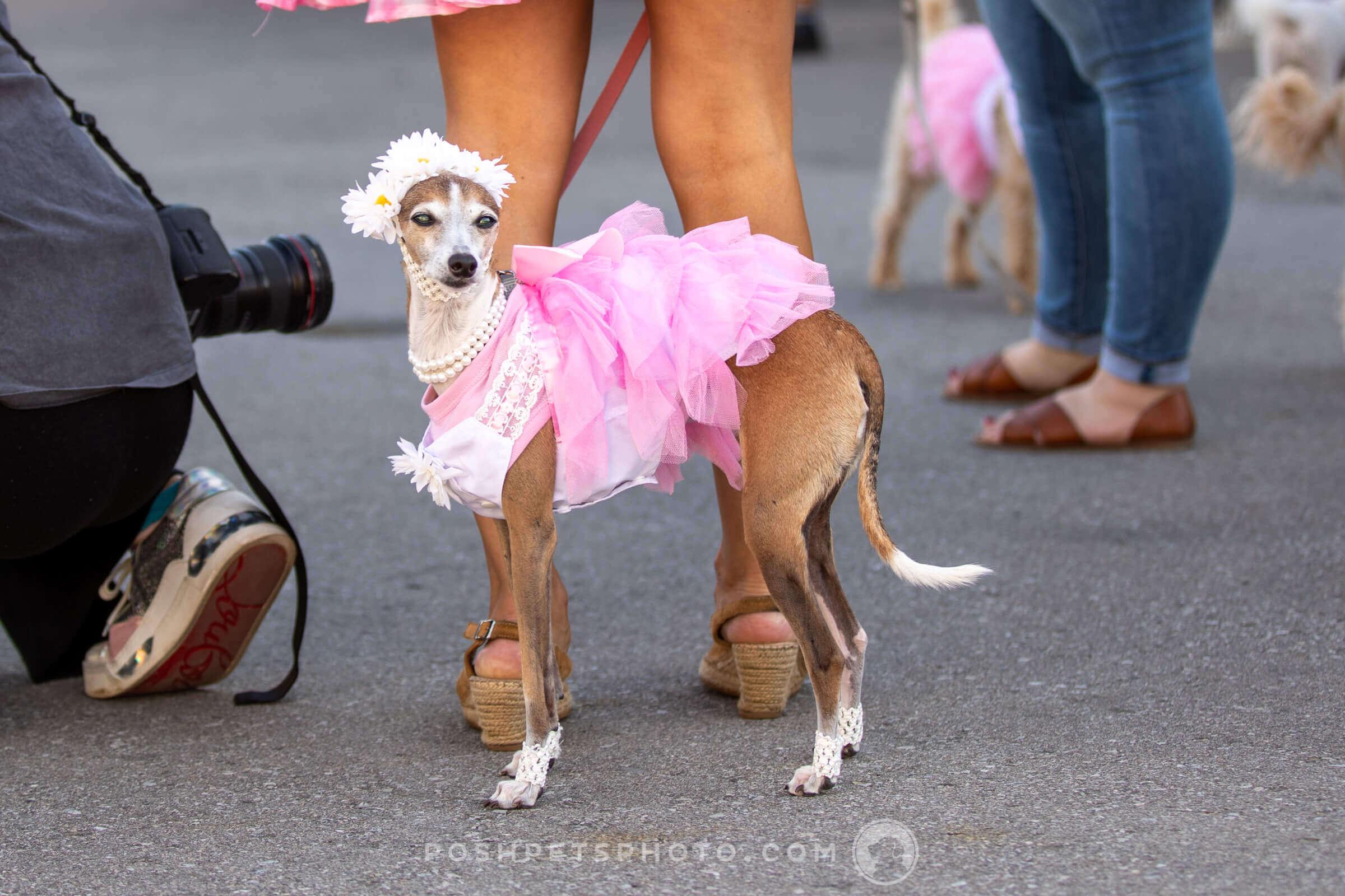 posh-pets-photography-19