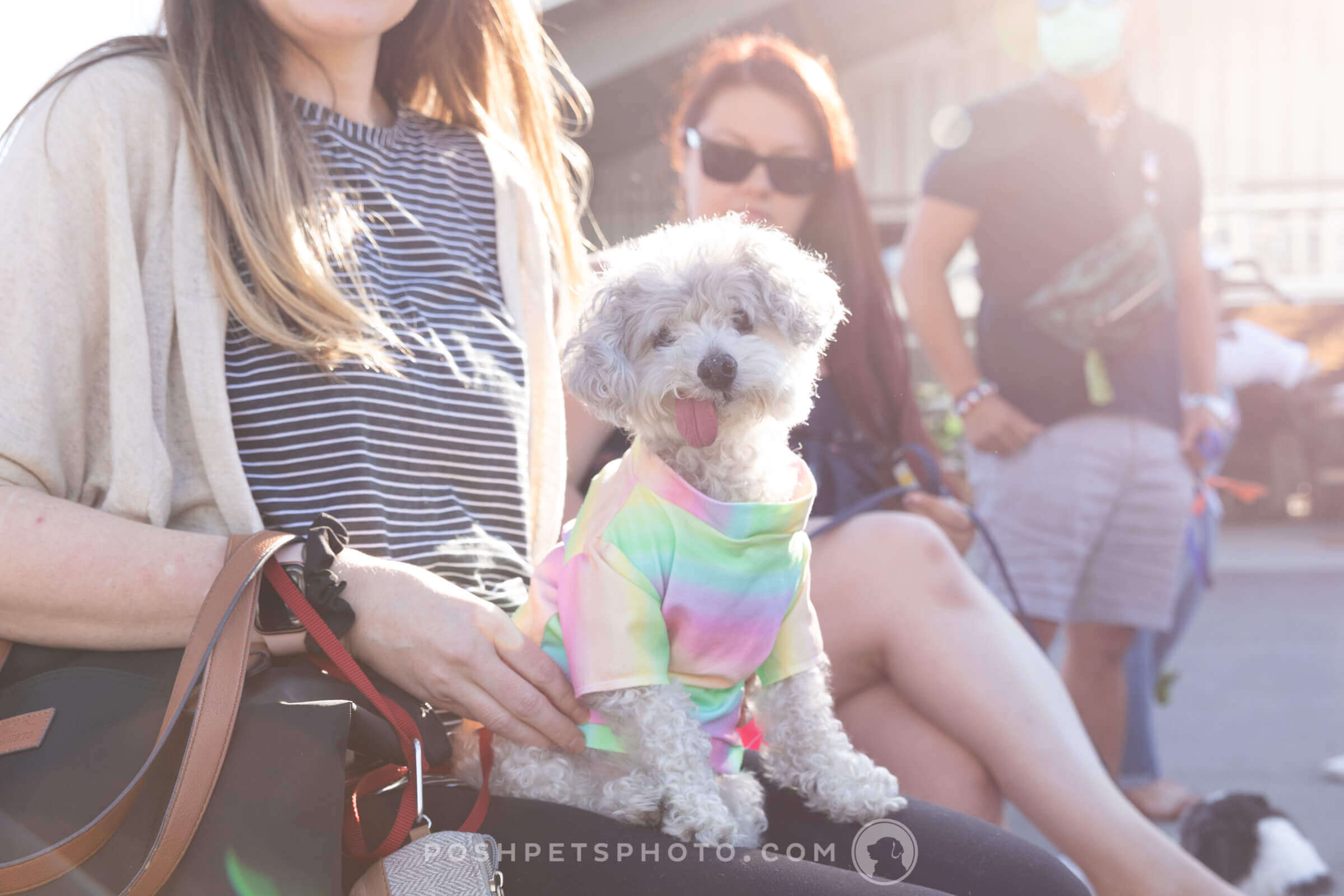 dog in tie dye shirt