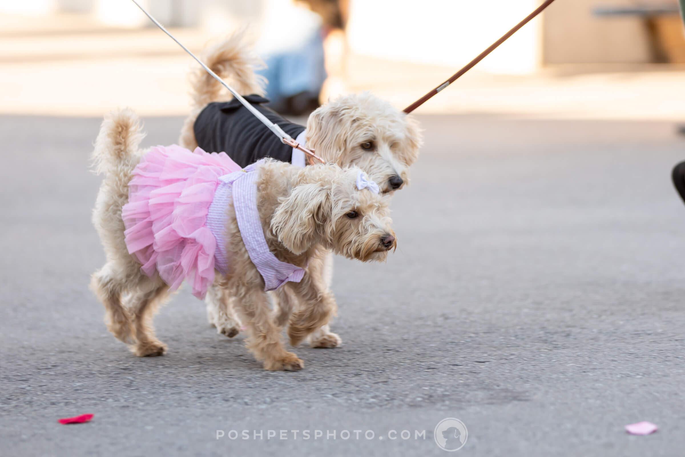 posh-pets-photography-26