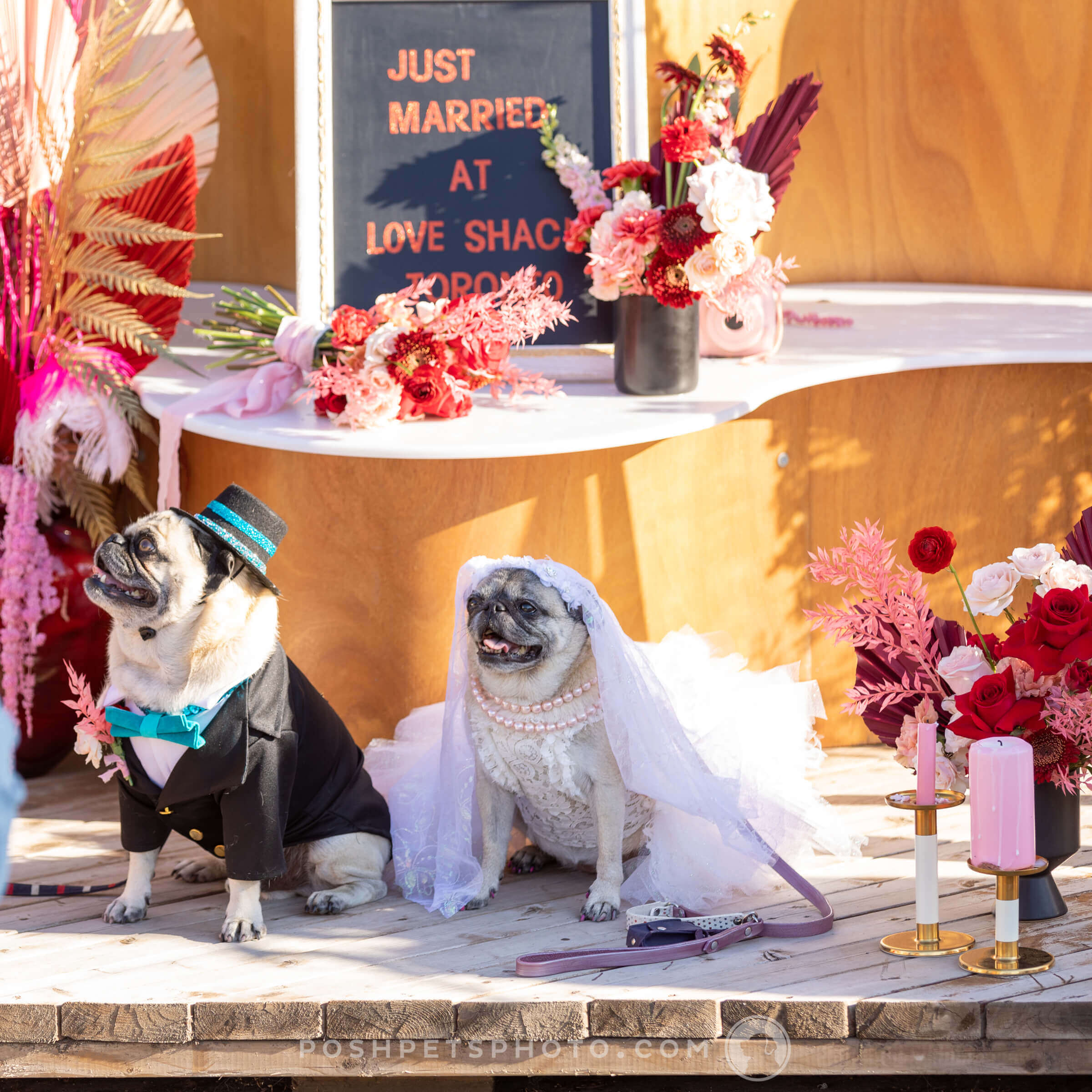 bride and groom at dog wedding