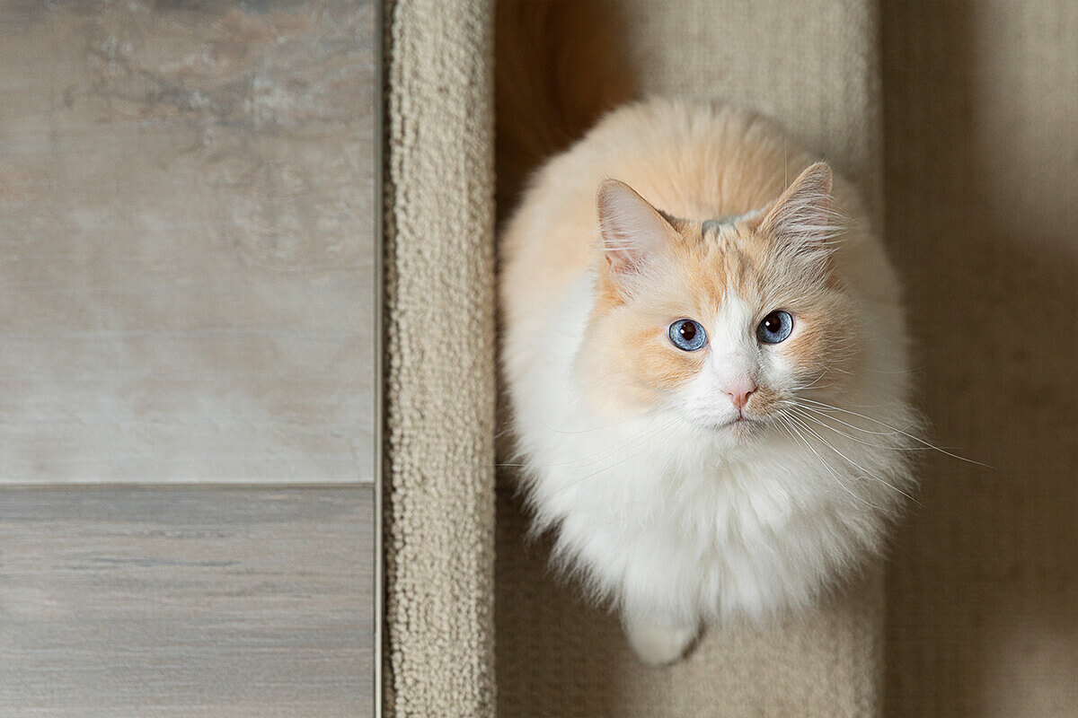 cat looking up on stairs during photo session