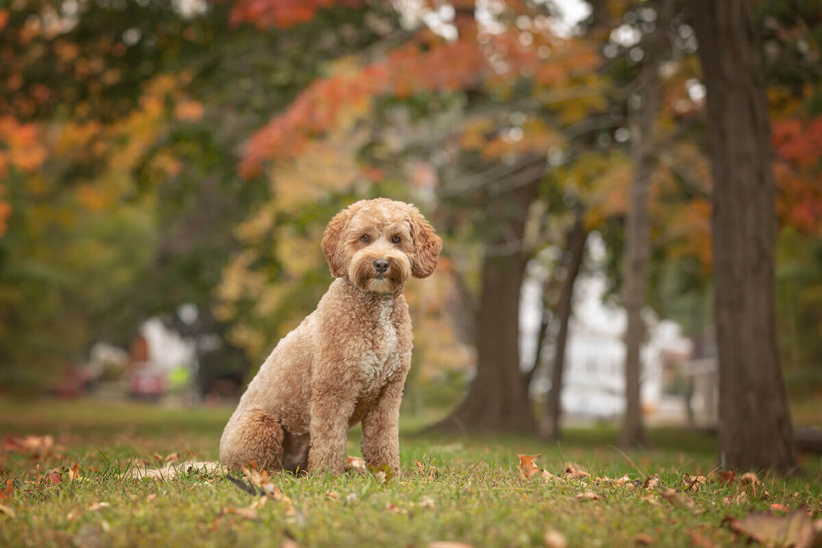 outdoor dog photo shoot in Toronto