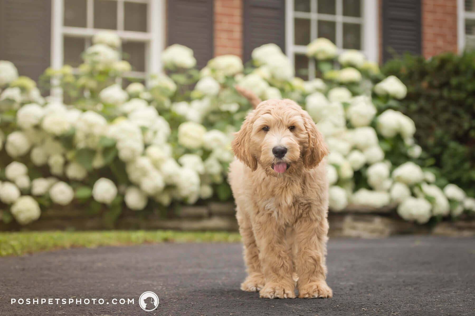 happy customer review for dog photography