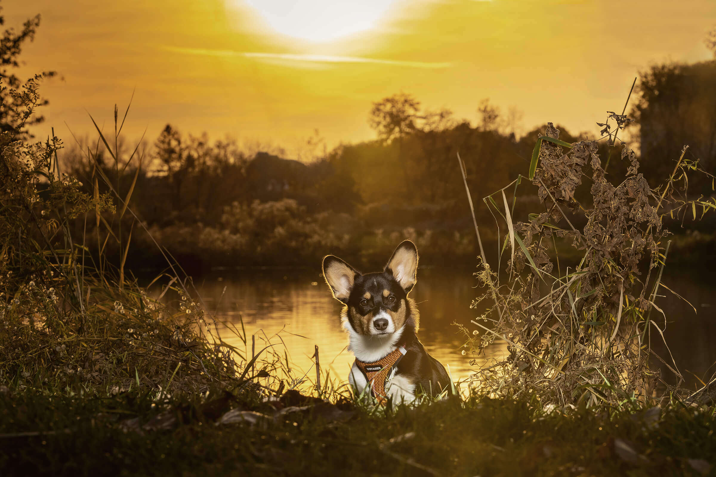 puppy photo session at sunset in Toronto
