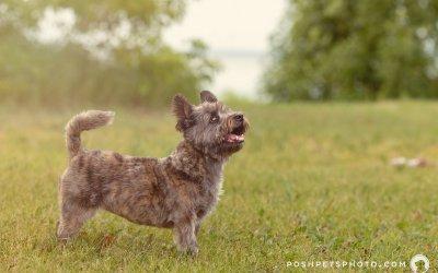 Enjoy the Toronto Summer | Preventing Heatstroke in Dogs