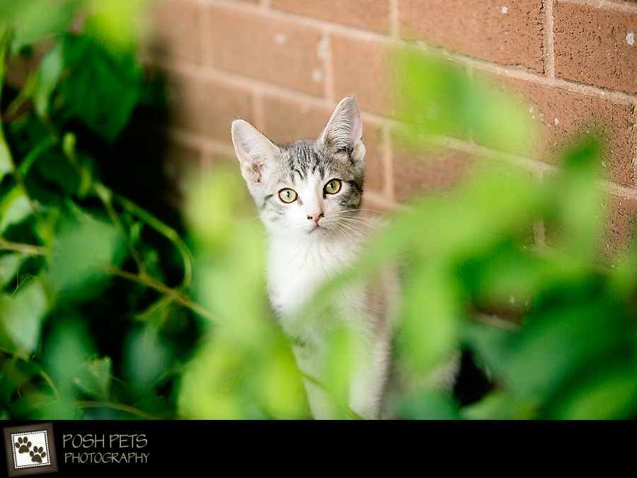 Project 52 – Selective Focus | Pet Photography