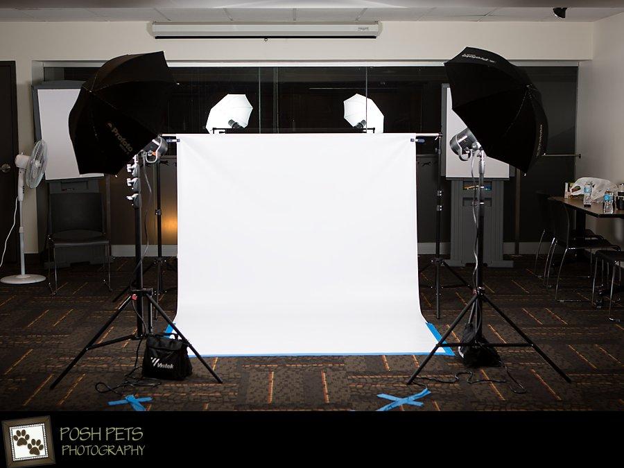 Calendar Girls & Boys – Canada Pooch Calendar Cuties Photography Shoot | Toronto Pet Studio
