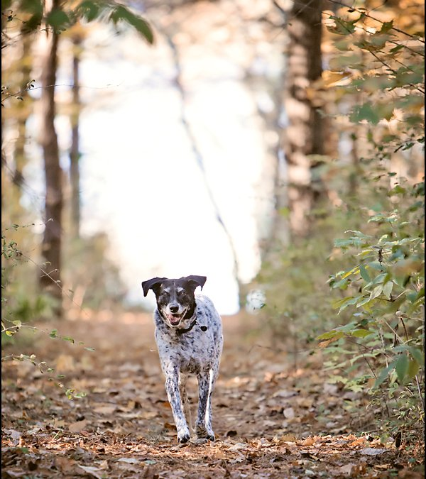Project 52 – Fall | Toronto Pet Photographer