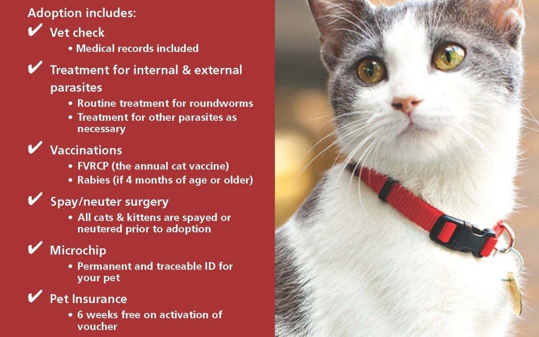 Toronto Animal Services Ad | Canada Pet Stock Photographer