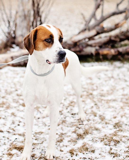 2012 Posh Pets Photography Recap | Toronto, Ontario